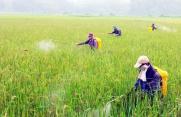 Tìm hiểu ngành Bảo vệ thực vật là gì? học gì? ra trường làm gì?